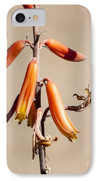Aloe Flower And Stem Phone Case by Darcy Michaelchuk
