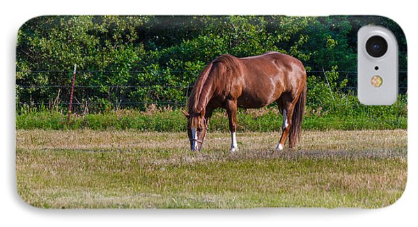 Alone In The Pasture IPhone Case by Doug Long