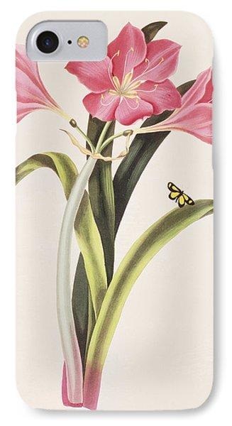 Amaryllis Purpurea Phone Case by Robert Havell