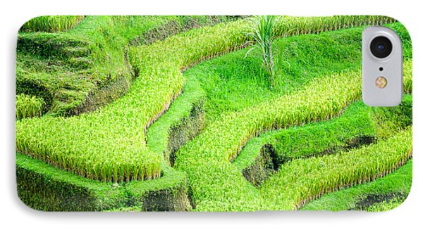 IPhone Case featuring the photograph Amazing Rice Terrace Field by Luciano Mortula