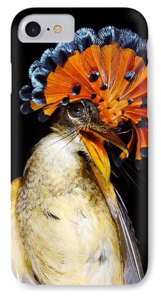 Amazonian Royal Flycatcher Phone Case by Dr Morley Read