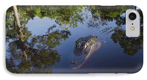 American Alligator In The Okefenokee Swamp IPhone Case by Pete Oxford