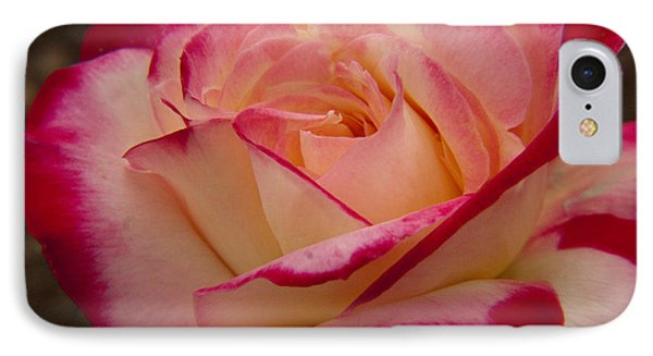 IPhone Case featuring the photograph American Beauty Rose by Darleen Stry