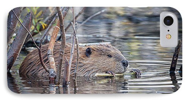 American Beaver IPhone Case by Ronald Lutz