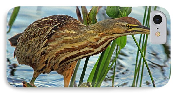 American Bittern IPhone Case by Larry Nieland