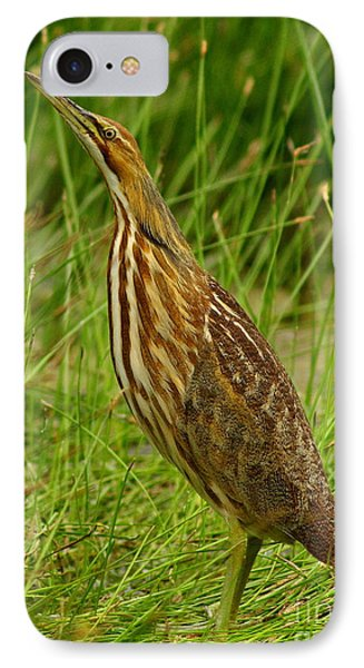 American Bittern Looking Up IPhone Case