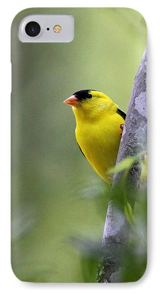 American Goldfinch - Peaceful IPhone Case