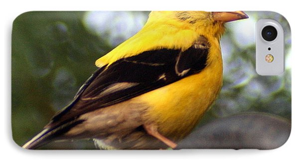 IPhone Case featuring the photograph American Goldfinch by Laurel Talabere