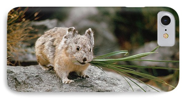 IPhone Case featuring the photograph American Pika by Doug Herr