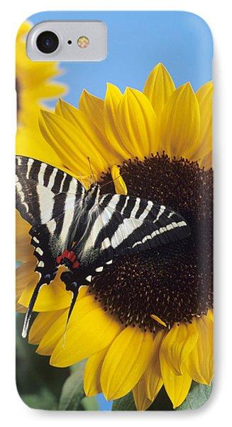 American Swallowtail IPhone Case by David Aubrey