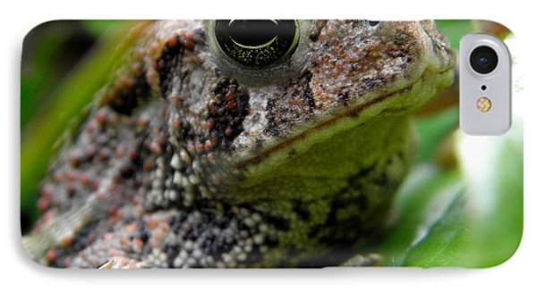 American Toad Phone Case by Griffin Harris