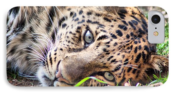 IPhone Case featuring the photograph Amur Leopard by Lynne Jenkins