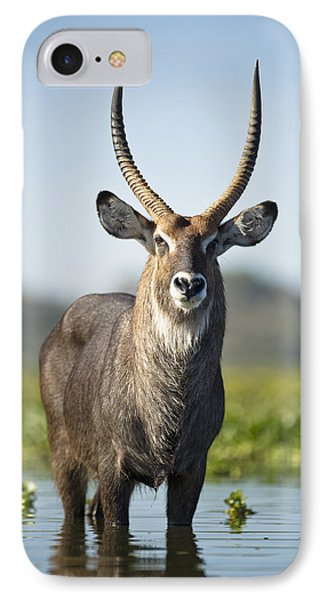 An Antelope Standing In Shallow Water Phone Case by David DuChemin