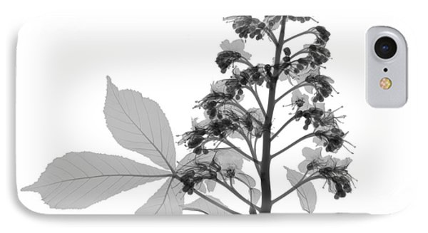 An X-ray Of A Chestnut Tree Flower Phone Case by Ted Kinsman