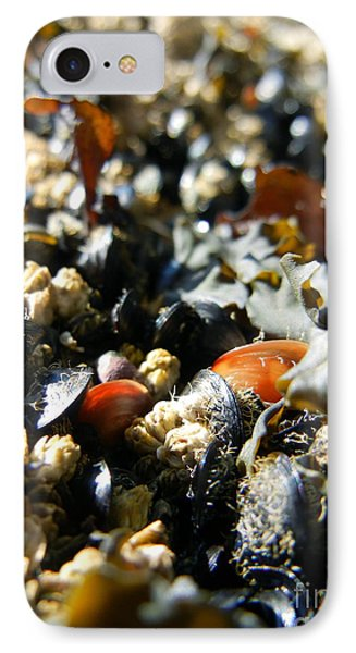 And Cockle Shells IPhone Case by KD Johnson