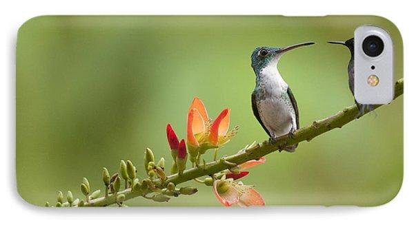 Andean Emerald Amazilia Franciae Phone Case by Murray Cooper