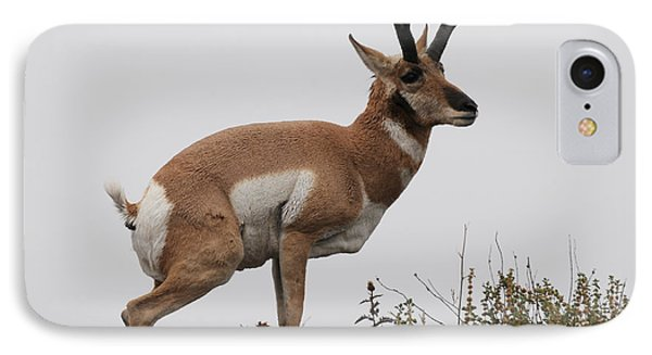 Antelope Critiques Photography IPhone Case