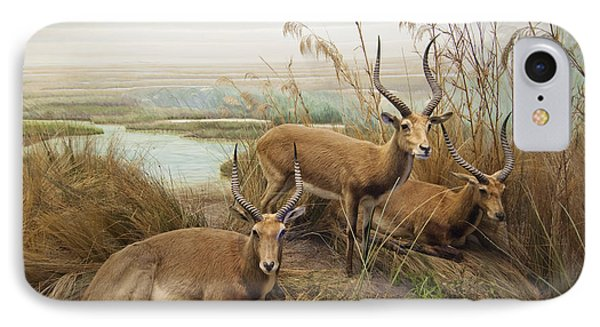 Antelope In The Grass Near The River Phone Case by Laura Ciapponi