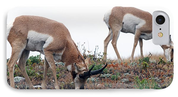 Antelopes Grazing IPhone Case by Art Whitton