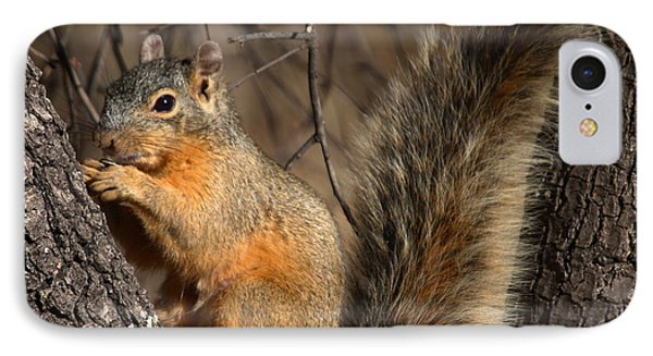Apache Fox Squirrel Phone Case by David Salter