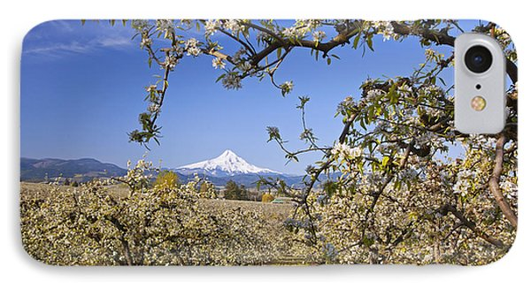 Apple Blossom Trees In Hood River Phone Case by Craig Tuttle