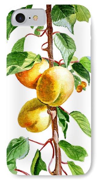 Apricots Phone Case by Irina Sztukowski