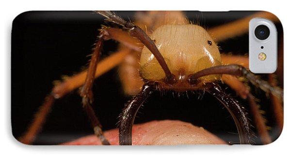 Army Ant Eciton Hamatum Major Worker Phone Case by Mark Moffett