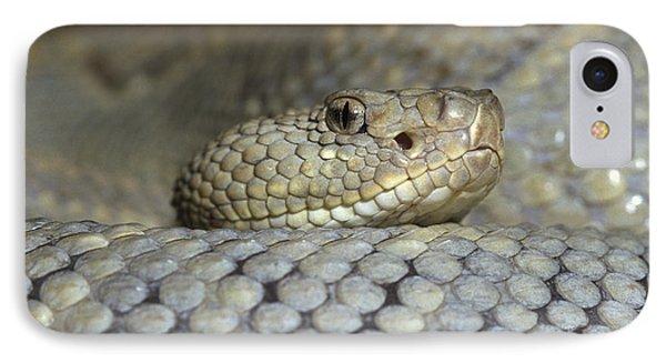 Aruba Rattlesnake Crotalus Unicolor Phone Case by Gerry Ellis