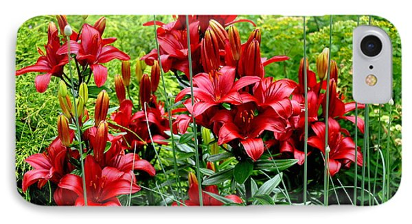 Asiatic Lilies 2 IPhone Case by Tanya  Searcy