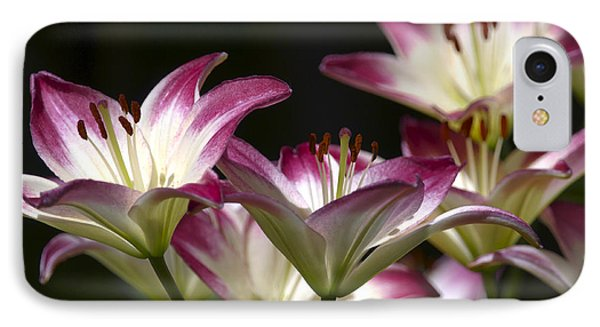 Asiatic Lilies IPhone Case by Sharon Talson