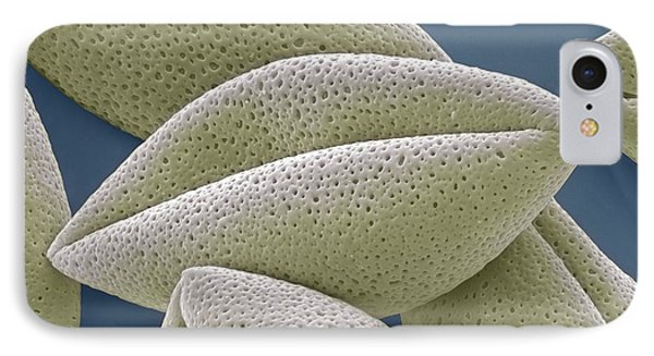 Asparagus Pollen Grains, Sem Phone Case by Steve Gschmeissner