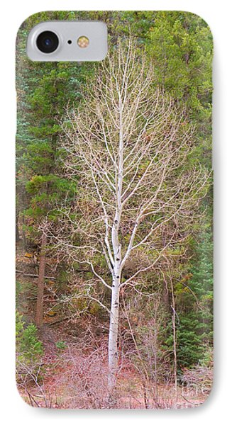 Aspen Tree Forest Road 249 IPhone Case by Donna Greene