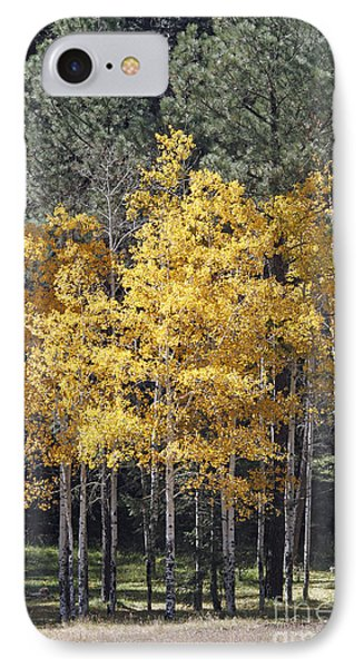 Aspens In Color IPhone Case