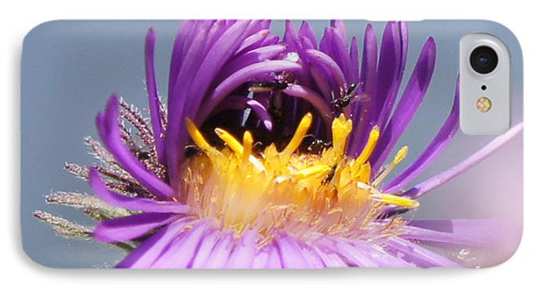 Asters Starting To Bloom Close-up Phone Case by Robert E Alter Reflections of Infinity