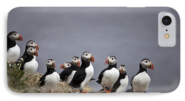 Atlantic Puffins On Cliff Edge Phone Case by Greg Dimijian