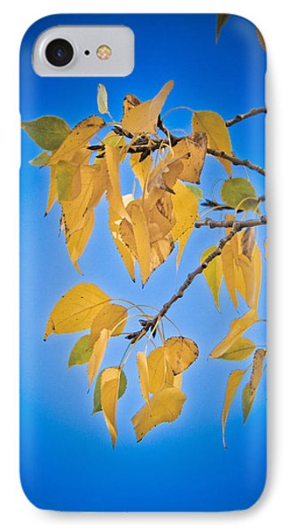Autumn Aspen Leaves And Blue Sky Phone Case by James BO  Insogna