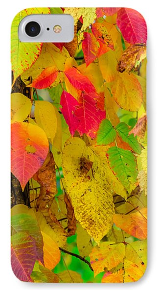 IPhone Case featuring the photograph Autumn by Brian Stevens