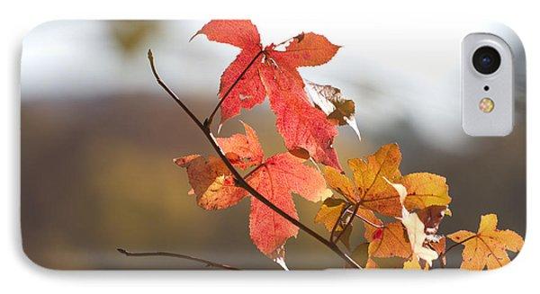 Autumn Colors-arkansas Phone Case by Douglas Barnard
