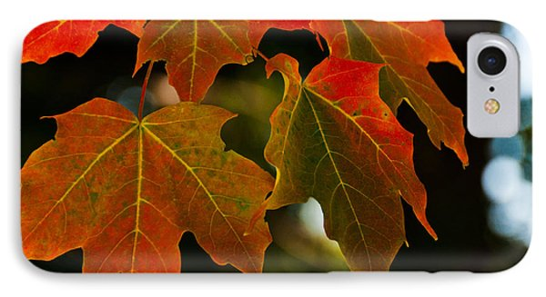 IPhone Case featuring the photograph Autumn Glory by Cheryl Baxter