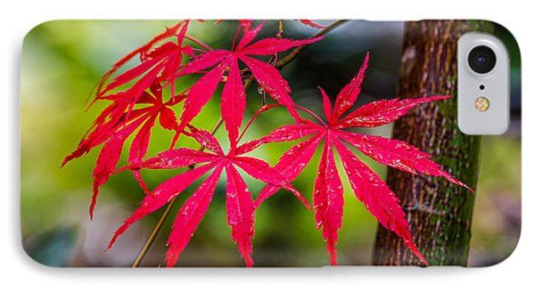 Autumn Japanese Maple IPhone Case by Ken Stanback