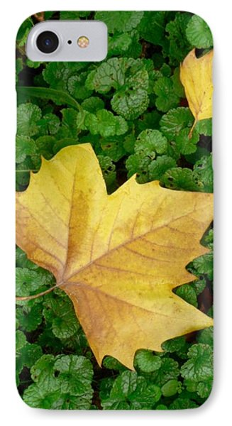 Autumn Just Began Phone Case by Philippe Taka