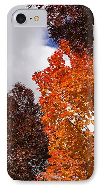 IPhone Case featuring the photograph Autumn Looking Up by Mick Anderson