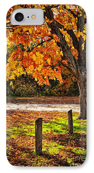 Autumn Maple Tree Near Road IPhone Case