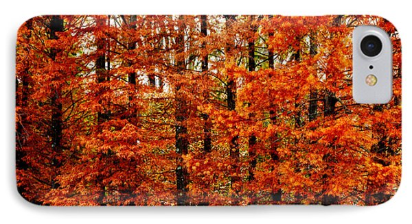 Autumn Red Maple Landscape IPhone Case by Carol F Austin
