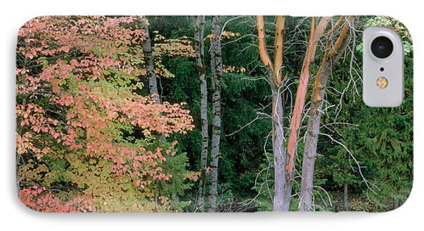 Autumn Scene Phone Case by Mark Greenberg