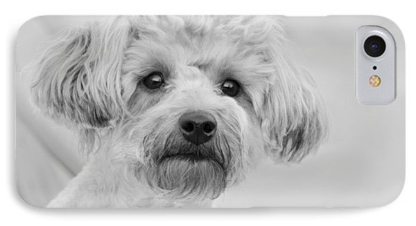 Awesome Abby The Yorkie-poo Phone Case by Kathy Clark