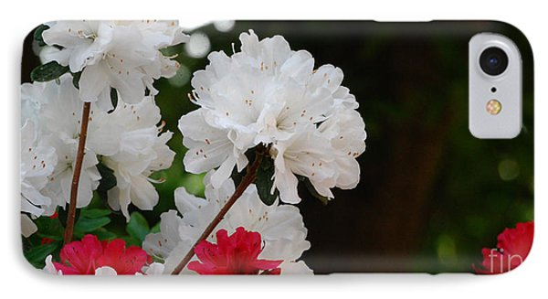 Azaleas IPhone Case by Linda Mesibov