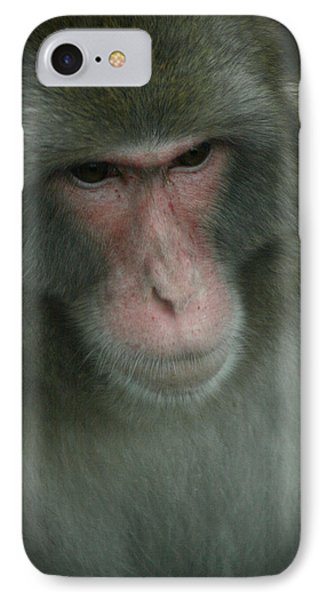 IPhone Case featuring the photograph Baboon by Cindy Haggerty