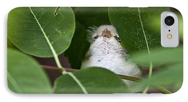 Baby Bird Peeping In The Bushes IPhone Case by Jeannette Hunt