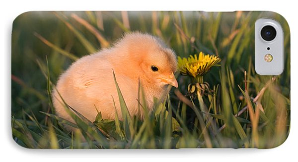 Baby Chick In Green Grass Phone Case by Cindy Singleton
